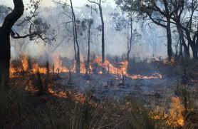 1983 bushfires 1