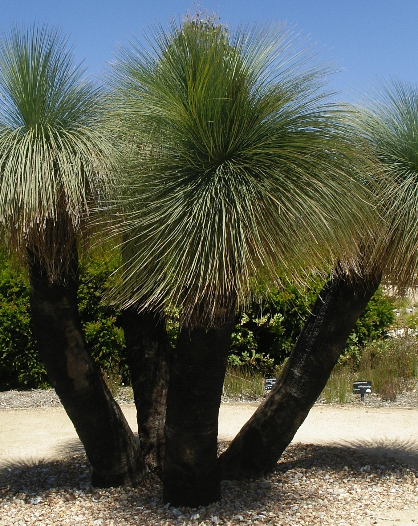 plants  u0026 gardens