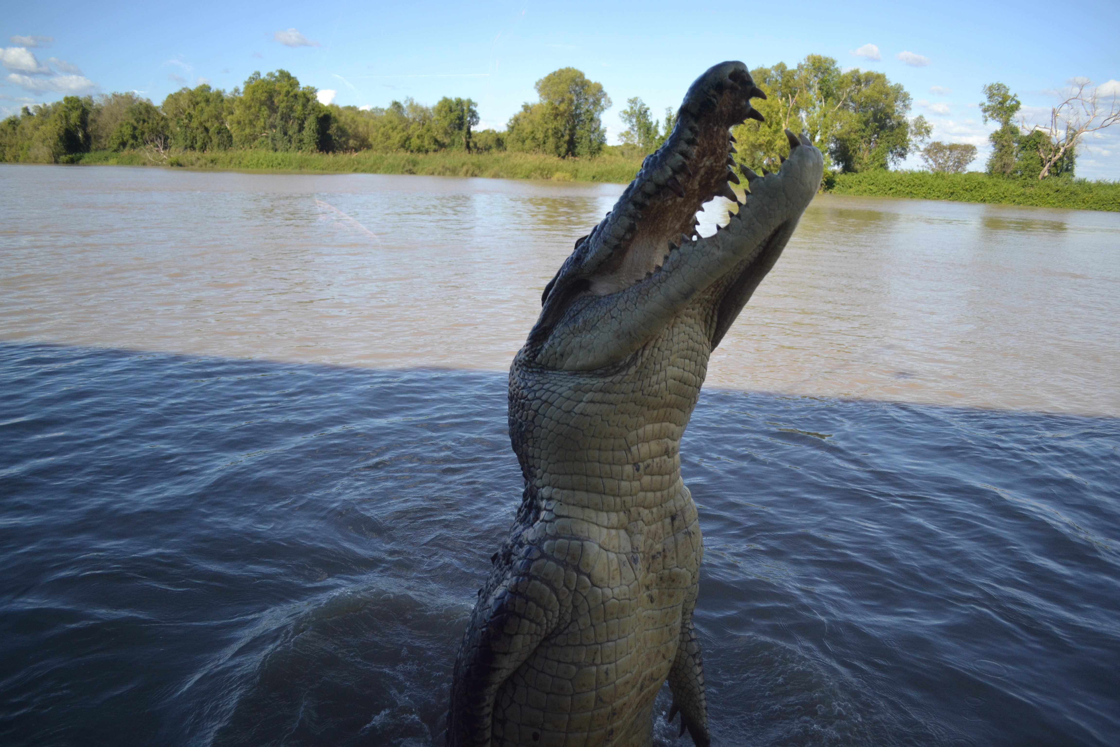 val plumwood a crocodile story This week we ponder on these issues in a program about val plumwood  philosophy and the natural world - val plumwood a crocodile pushed her out of her canoe.