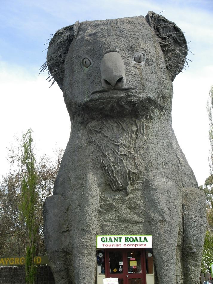 1 Big Koala